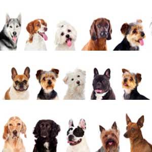 hunderassen-hundestar
