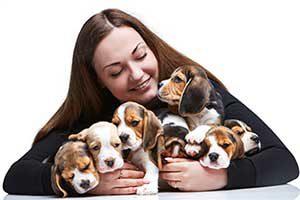 Beagle-Welpe-Bild