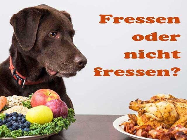 hund-fressen-lebensmittel