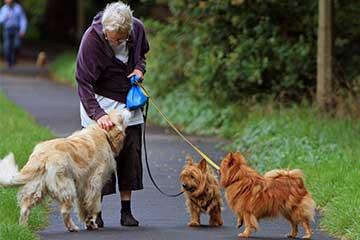 Hunde-Seele-Mensch