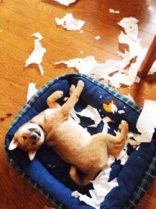 hundebett-zerstoert