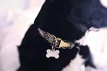 hundehalsband-hunde