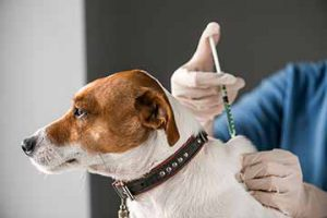 hunde-impfung-tierarzt