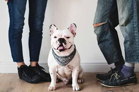 franzoesische-bulldogge-familie