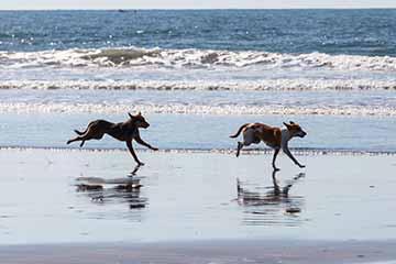 hunde-am-strand