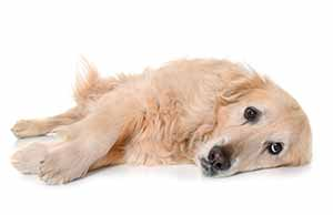 kranker-hund-hausmittel-durchfall