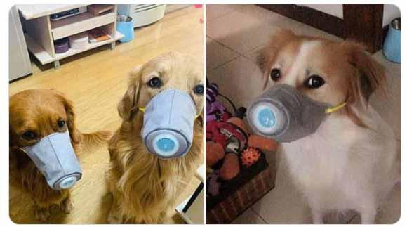 coronavirus-hunde-maske
