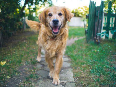 hund-blickt-kamera