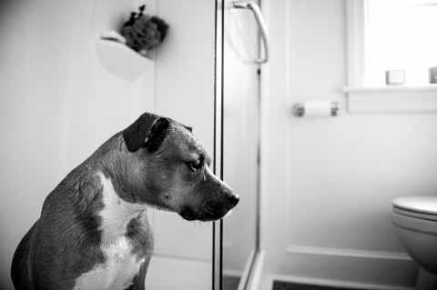 hund-wasser-toilette