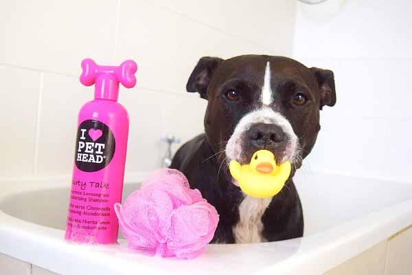 hunde-haferflocken-shampoo