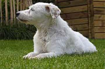 kranker-hund