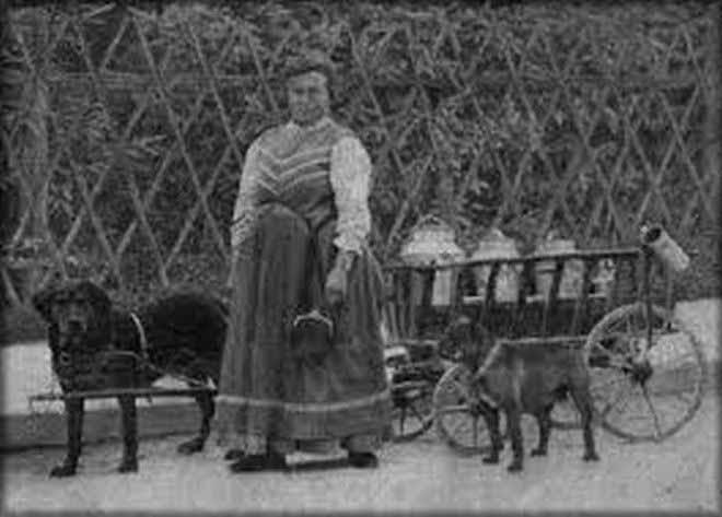 rottweiler-karrenhund