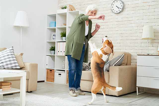 hund-zuhause