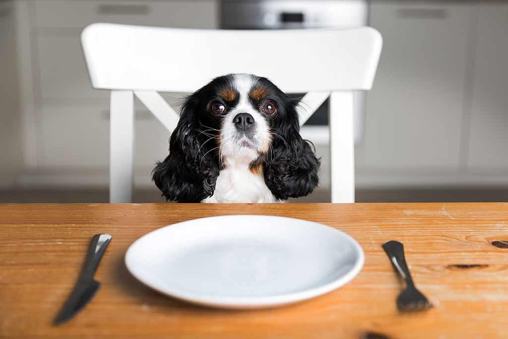allergie-hunde-fleisch