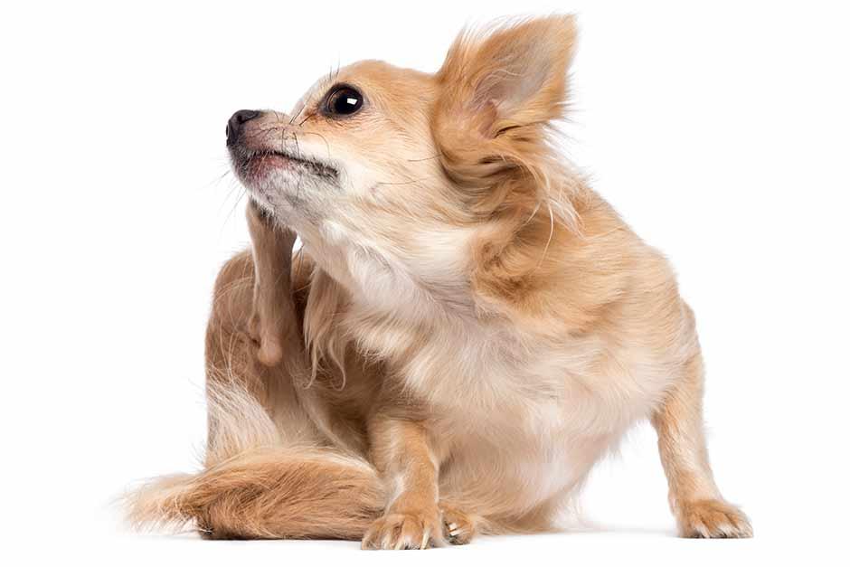 hund-futter-allergie