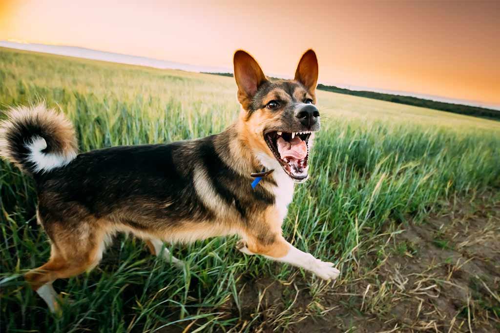 hund-bellt-hund-an