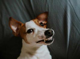 hund-zaehne-klappern