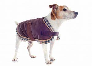jack-russel-terrier-hundemantel