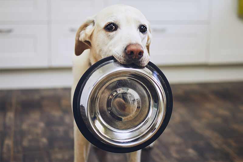 natuerliches-hundefutter-hunger