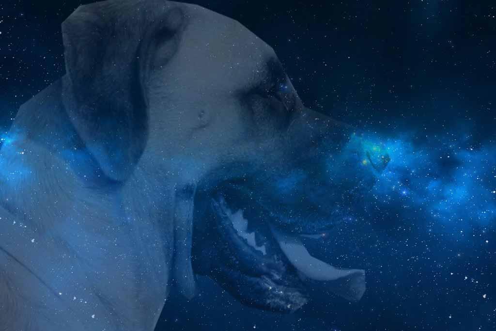 Welcher Hund Passt Zu Welchem Sternzeichen