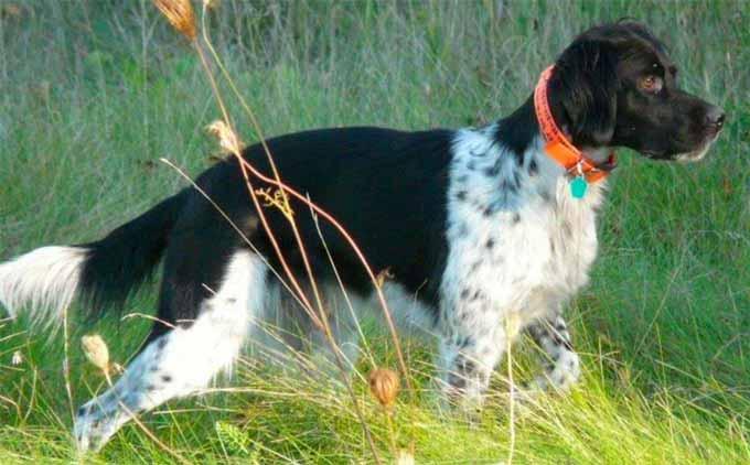 appalachian-turkey-dog